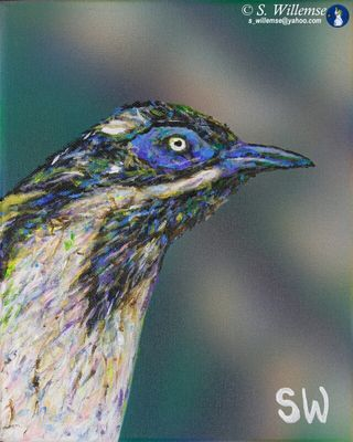Blue-faced honeyeater by Susan Willemse - search and link Fine Art with ARTdefs.com