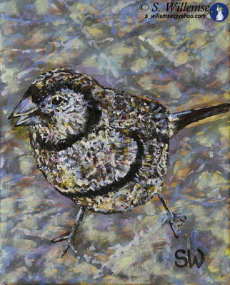 Double-barred finch by Susan Willemse - search and link Fine Art with ARTdefs.com