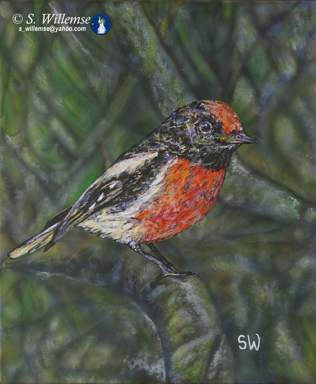 Red-capped Robin by Susan Willemse - search and link Fine Art with ARTdefs.com