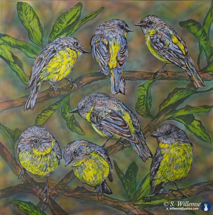 Yellow Robins and banksia by Susan Willemse - search and link Fine Art with ARTdefs.com