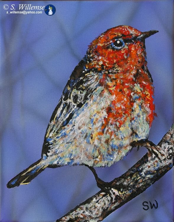 Scarlet honeyeater by Susan Willemse - search and link Fine Art with ARTdefs.com
