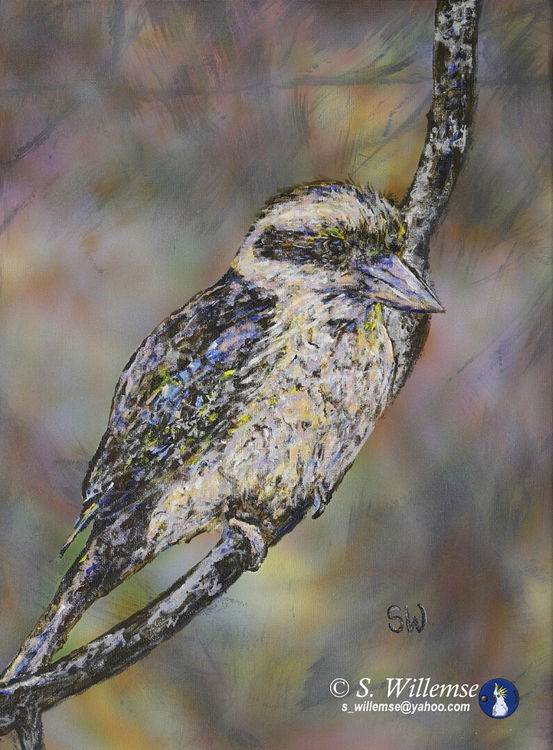 Thoughtful Kookaburra by Susan Willemse - search and link Fine Art with ARTdefs.com