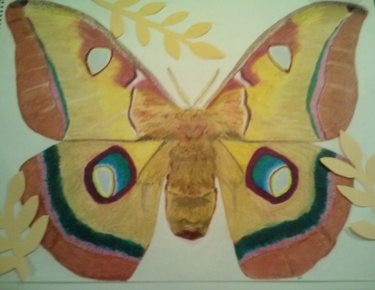 Polyphemus Moth1 by Susan Royer - search and link Fine Art with ARTdefs.com