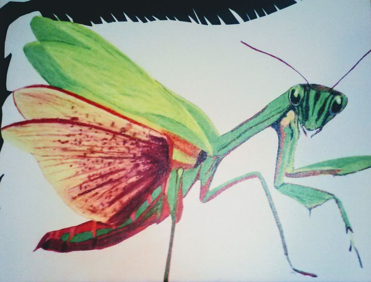 Resting Mantis by Susan Royer - search and link Fine Art with ARTdefs.com