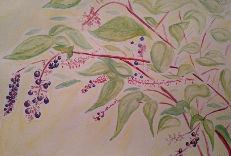 Pokeberries by Susan Royer - search and link Fine Art with ARTdefs.com