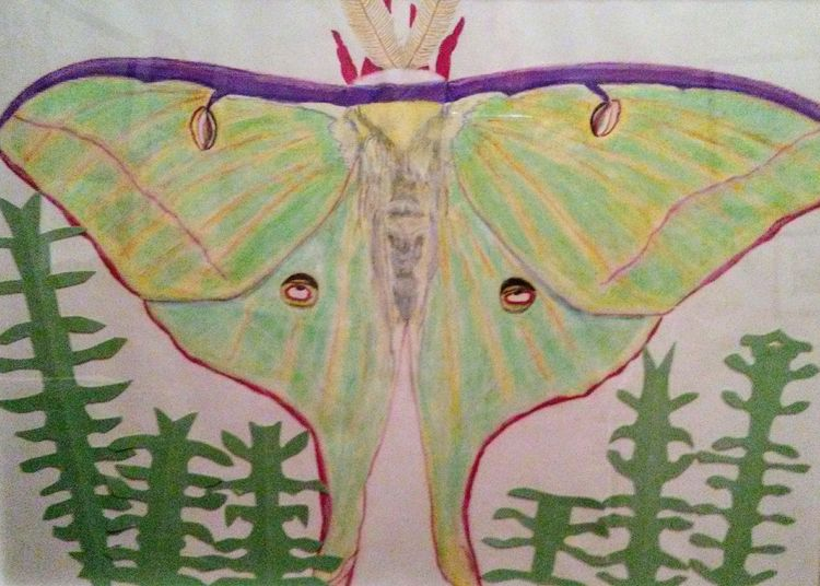 Luna Moth by Susan Royer - search and link Fine Art with ARTdefs.com