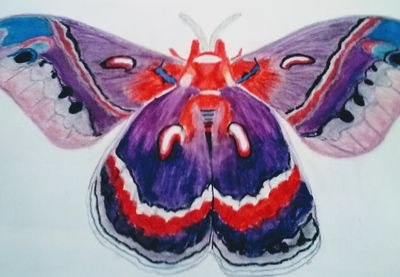 Polyphemus MothToo by Susan Royer - search and link Fine Art with ARTdefs.com