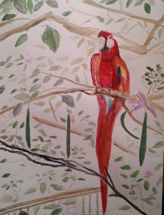 Crimson Macaw by Susan Royer - search and link Fine Art with ARTdefs.com